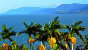 Row of palm trees in Port Douglas Queensland Australia. Row of palm trees on the coast of Port Douglas in the tropical north of Queensland, Australia stock photo
