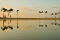 Row of palm trees reflected in a lake Stock Photography