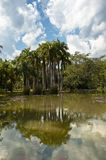 Row of palm trees reflected in a lake Stock Photo
