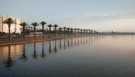 Row of Palm Trees by a River Stock Photo