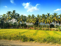 row of palm trees at the road. Royalty Free Stock Photo
