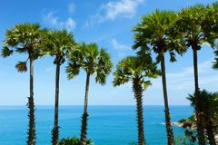 Row of Palm trees in tropical island with clear blue sky scenery Stock Photo