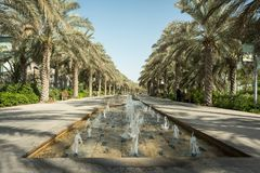 Row of Palm Trees at Umm Al Emarat Park. Abu Dhabi royalty free stock photography