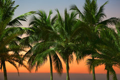 Row of palm trees. Under street lights with sunset sky and horizon line on the sea in the background, Pattaya beach, Thailand Stock Photography