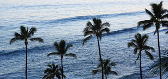 Row of palm trees and waves Stock Photos