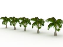 Row of palms Royalty Free Stock Image
