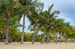 A row of palms on the shore Royalty Free Stock Photography