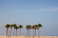 Row palmtrees Royalty Free Stock Photography