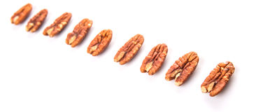 A Row Of Pecan Nut II Royalty Free Stock Photography
