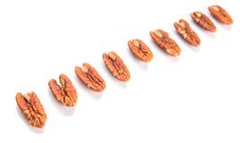 A Row Of Pecan Nut VI Stock Photos
