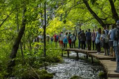 Row of people over a gangway immersed in nature Stock Images