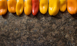 Row of Peppers. A row of ripe peppers Stock Photos