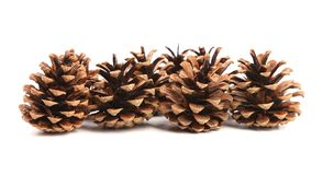 Row of pine cones. Royalty Free Stock Photography