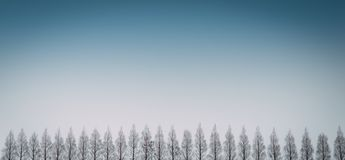 Row of pine trees with clear blue sky. stock images