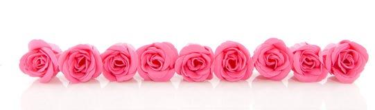 Row pink soap roses stock photos