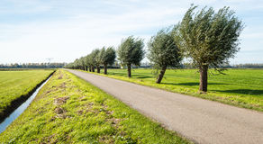 Row of pollard willow trees beside a country road. Rural landscape in autumn with a countru road and a row of pollard willows on a sunny afternoon Royalty Free Stock Photography