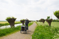 Row pollard willows and cow parsley. Dutch landscape in spring with row pollard willows and cow parsley and man with dogcar on the bike Stock Photo