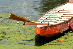 Row on Pollution. A frontal view of an orange rowing boat tied up with wooden ores sticking out of it and a red fender tied to the side, floating on green algae royalty free stock photos