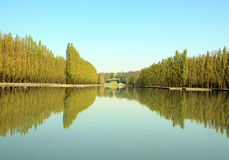 Row of poplars and their reflections in the water. Stock Images