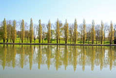 Row of poplars, a visual echo of the water Royalty Free Stock Photo