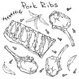 Row Pork Ribs and Herbs. Realistic Vector Illustration Isolated Hand Drawn Doodle or Cartoon Style Sketch. Fresh Meat Stock Photo