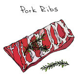 Row Pork Ribs and Herbs. Realistic Vector Illustration Isolated Hand Drawn Doodle or Cartoon Style Sketch. Fresh Meat Royalty Free Stock Photo