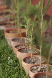 Row of Potted Trees Stock Photos