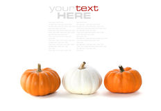 Row of pumpkins Stock Images