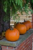 Row of pumpkins in the garden stock photo