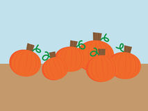 Row of Pumpkins Royalty Free Stock Photography