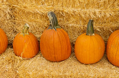 Row Of Pumpkins On Hay Royalty Free Stock Images