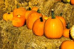 Row Of Pumpkins On Hay Bales Royalty Free Stock Image