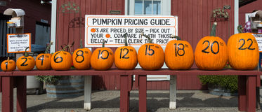 Row of Pumpkins and Prices Royalty Free Stock Photos