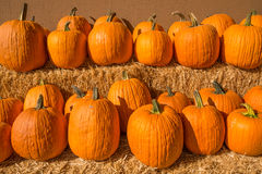 Row of pumpkins Royalty Free Stock Images