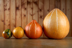 Row of pumpkins on a table Stock Photography