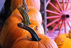 Row of Pumpkins with Wagon Wheel stock photography