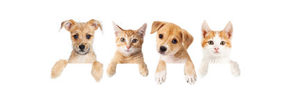 Row of puppies and kittens over blank banner