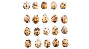 Row Of Quail Eggs IX Royalty Free Stock Image