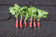 Row of Radish. A row of six freshly picked and organically grown radish. Set in a row on a landscape format against a dark background Stock Image
