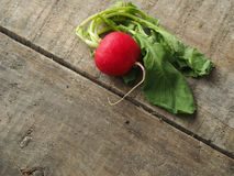 Row of radishes Royalty Free Stock Photography
