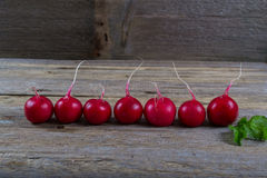A row of radishes Stock Photo