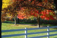 A row of rainbow autumn trees and a fence Royalty Free Stock Image