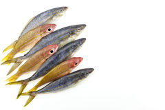 Row of rainbow runner fish and bigeye snapper fish isolated on w stock photo