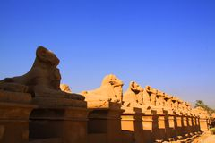 Row of ram statues at Karnak Temple in Luxor, Egypt. Row of ram statues (sphinxes) at Karnak Temple in Luxor, Egypt Royalty Free Stock Photo