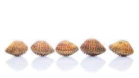 A Row of Raw Cockle I. A row of raw, fresh cockle over white background Royalty Free Stock Photo