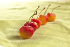 Row of red cherries. Fresh and ripe red cherries in a row Stock Images