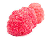 Row of red ripe raspberries isolated on white Royalty Free Stock Photo