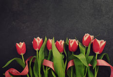 Row of red tulips against a dark background with space for the text. Festive flower background Stock Photography