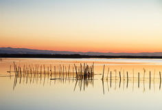 Row of reeds Royalty Free Stock Images
