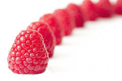 Row of ripe fresh raspberries Stock Image